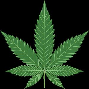 marijuana, boot ranch farms